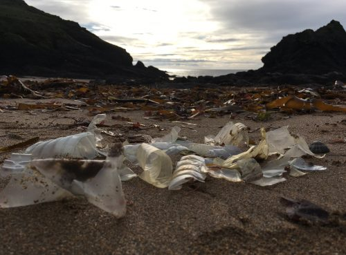plastic bottle fragments at soar mill cove